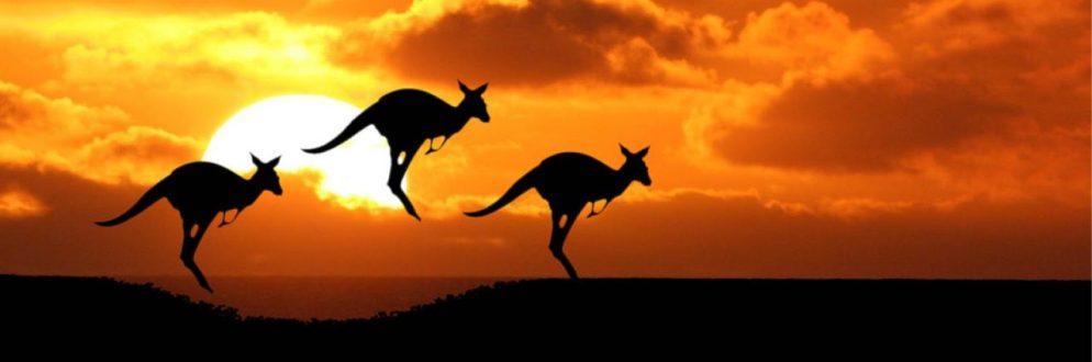 cropped-kenguru.jpg